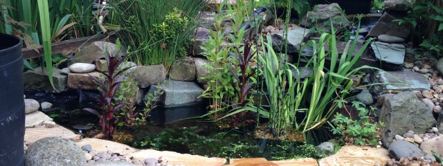 Wildlife pond waterfall harpenden maltby aquatics for Small garden pond care