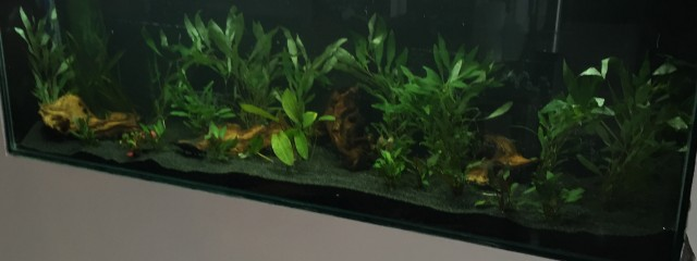 Aquarium Installation Luton Bedfordshire Maltby Aquatics