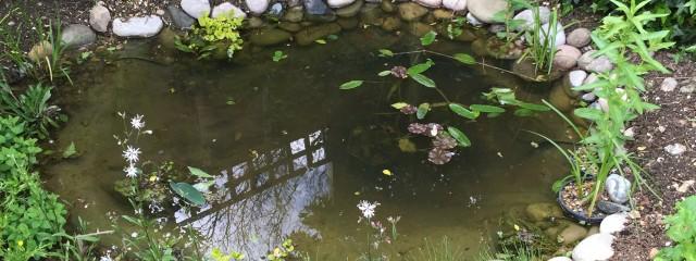 Wildlife pond build harpenden maltby aquatics pond for Wildlife pond design uk