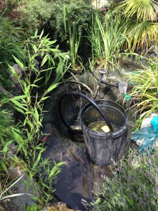 Complete Pond Cleaning Services
