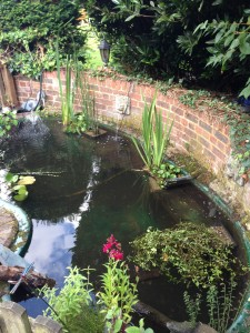 Pond Cleaning Wheathampsted Maltby Aquatics Pond