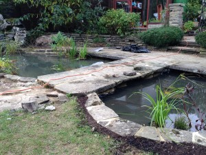 Complete Pond Design
