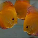 Tropical Aquarium Maintenance