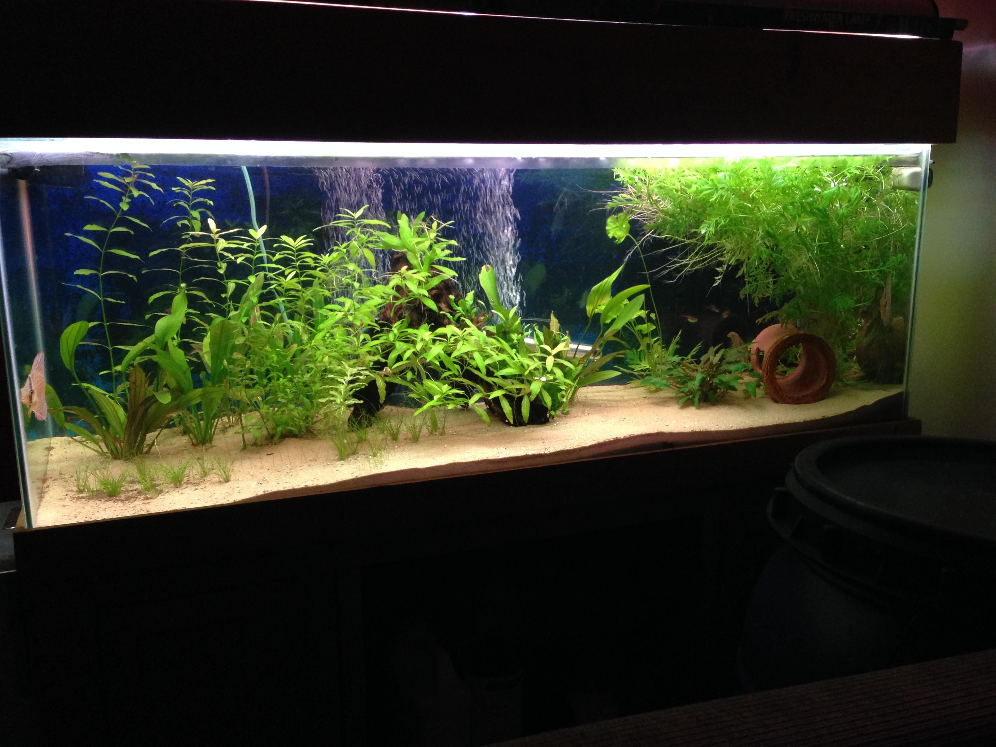Tropical Aquarium Installation Maltby Aquatics Pond