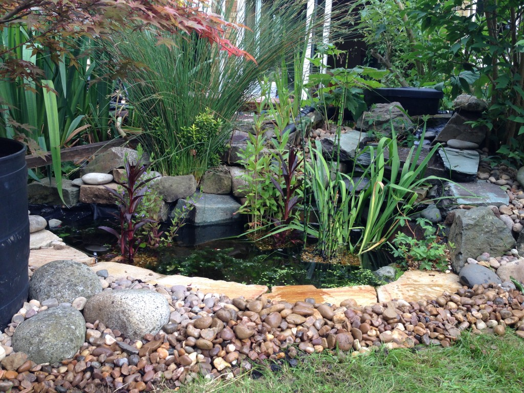 Wildlife pond waterfall harpenden maltby aquatics for Small pond maintenance