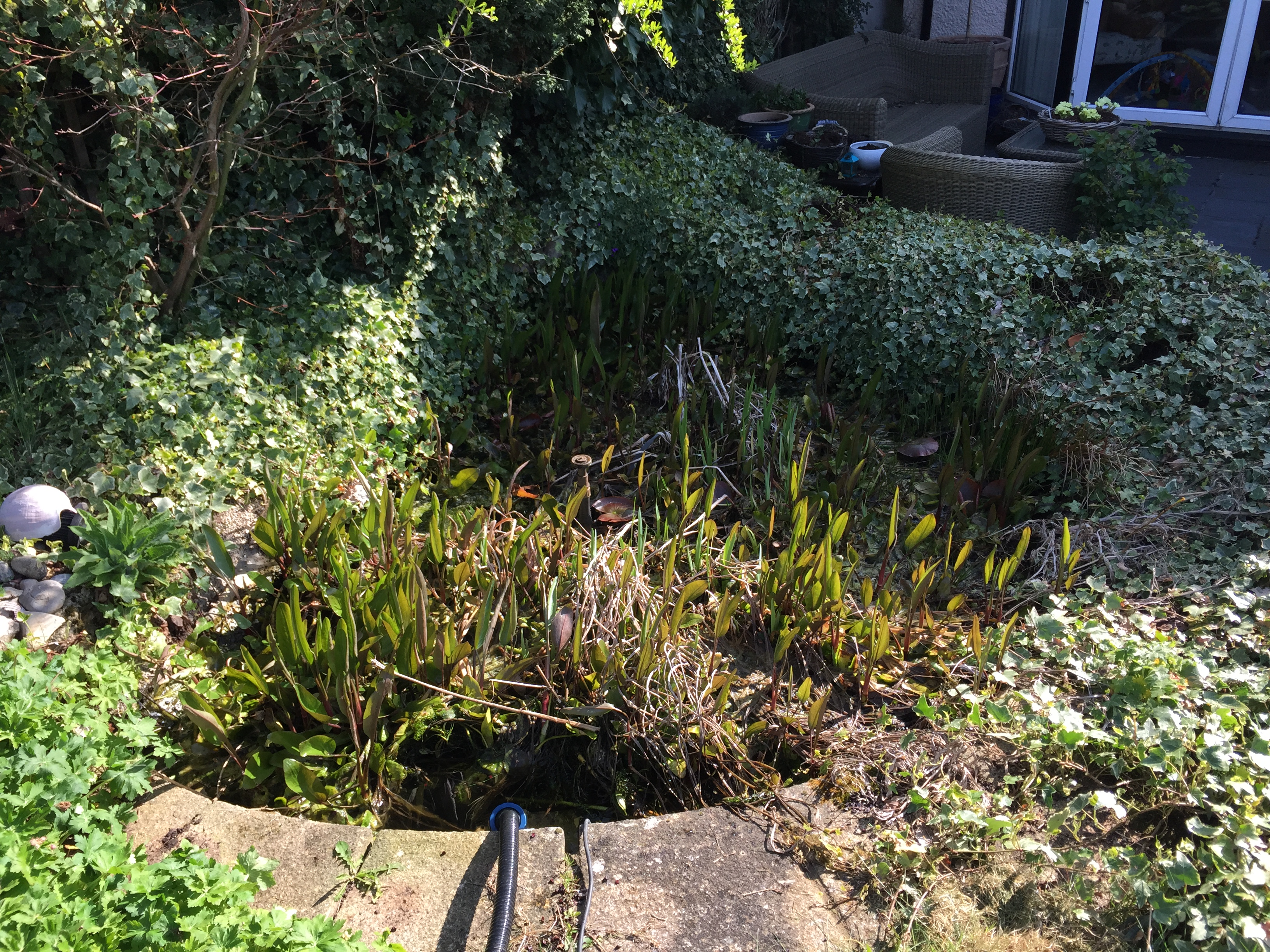 pond cleaning stbans maltby aquatics pond aquarium design