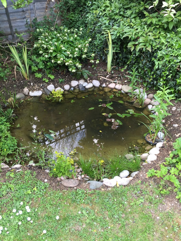 Wildlife pond build harpenden maltby aquatics pond for Small pond maintenance